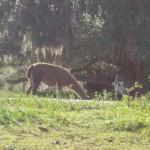 Llama2